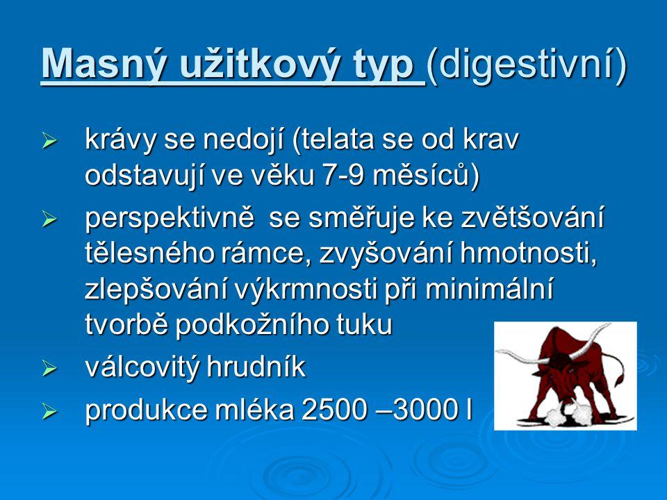 Masný užitkový typ (digestivní)
