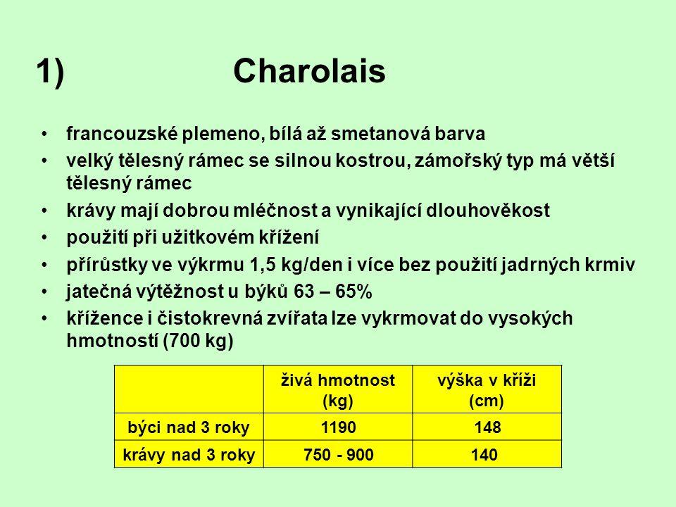 Charolais francouzské plemeno, bílá až smetanová barva