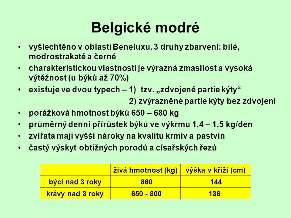 Belgické modré vyšlechtěno v oblasti Beneluxu, 3 druhy zbarvení: bílé, modrostrakaté a černé.