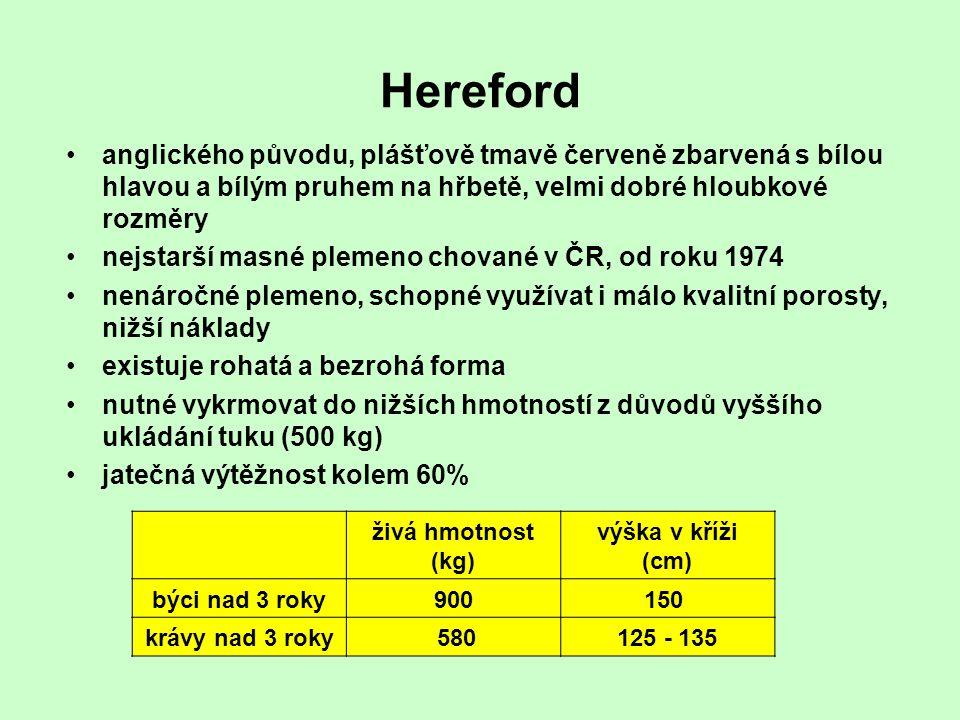 Hereford anglického původu, plášťově tmavě červeně zbarvená s bílou hlavou a bílým pruhem na hřbetě, velmi dobré hloubkové rozměry.