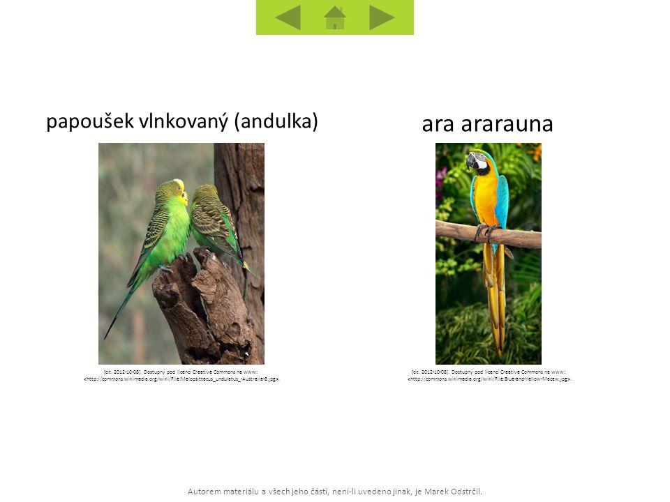 ara ararauna papoušek vlnkovaný (andulka)