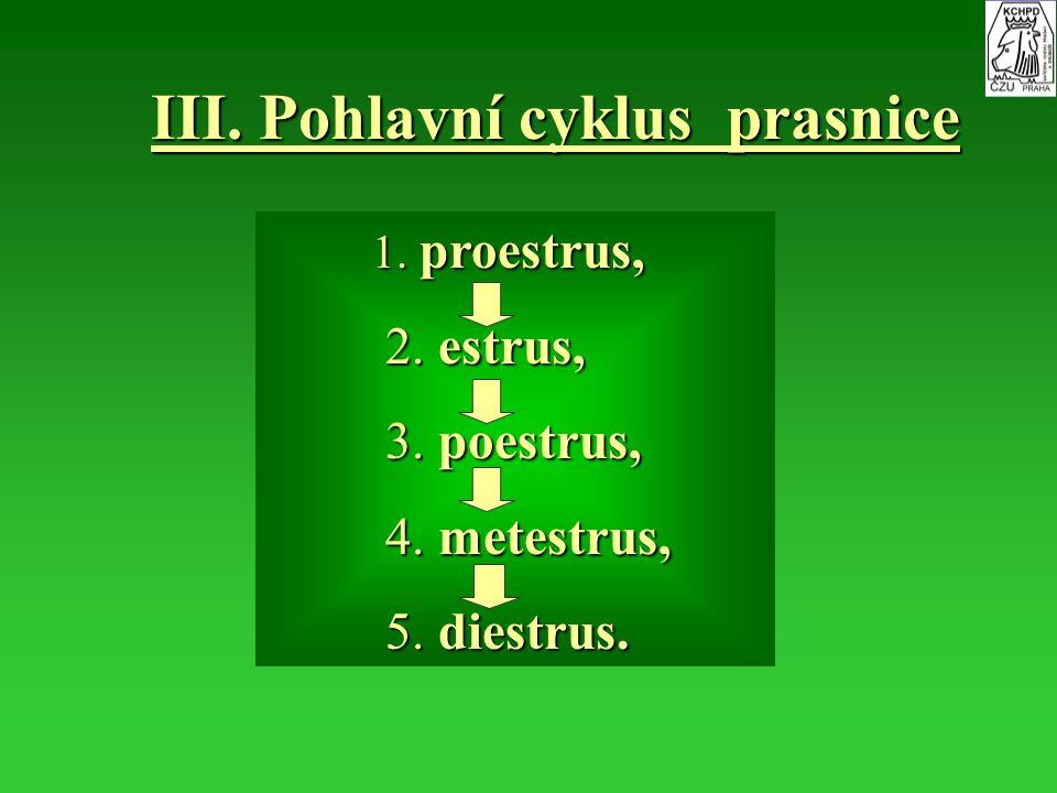 III. Pohlavní cyklus prasnice
