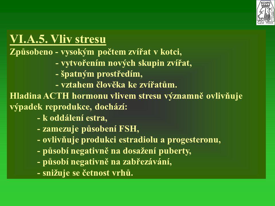VI.A.5. Vliv stresu Způsobeno - vysokým počtem zvířat v kotci,
