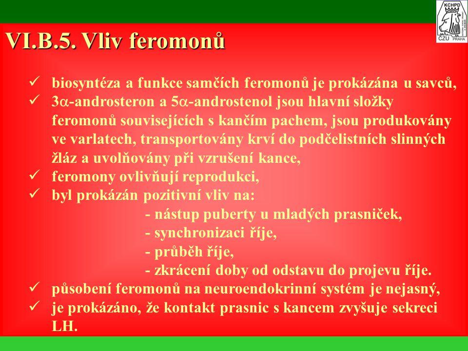 VI.B.5. Vliv feromonů biosyntéza a funkce samčích feromonů je prokázána u savců,