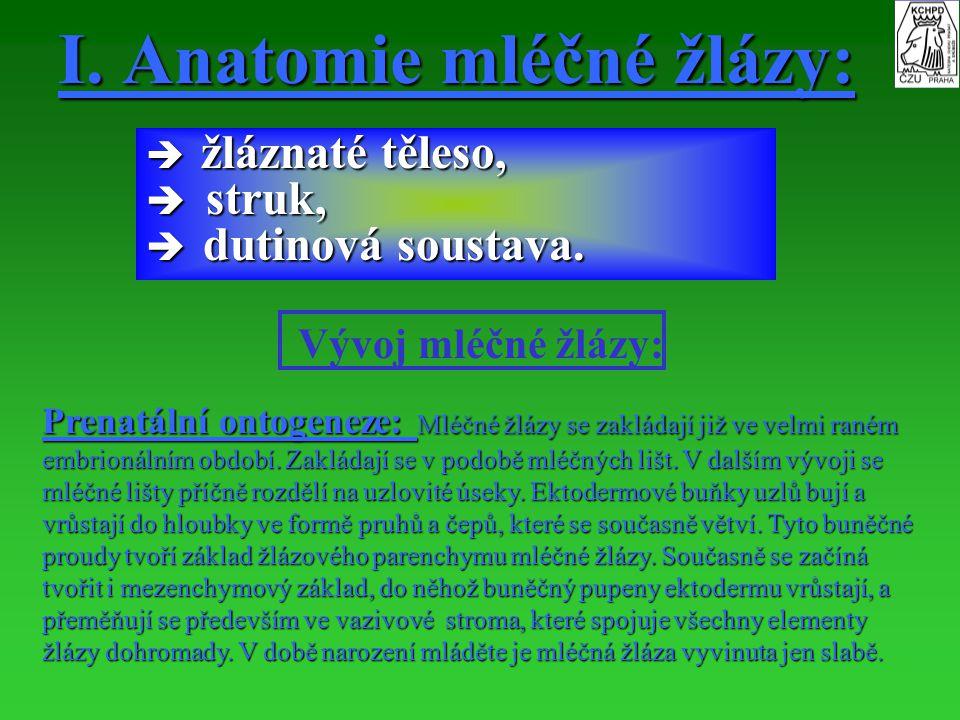 I. Anatomie mléčné žlázy: