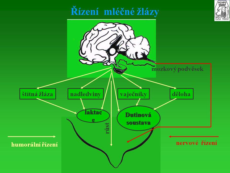 Řízení mléčné žlázy mozkový podvěsek štítná žláza nadledviny vaječníky