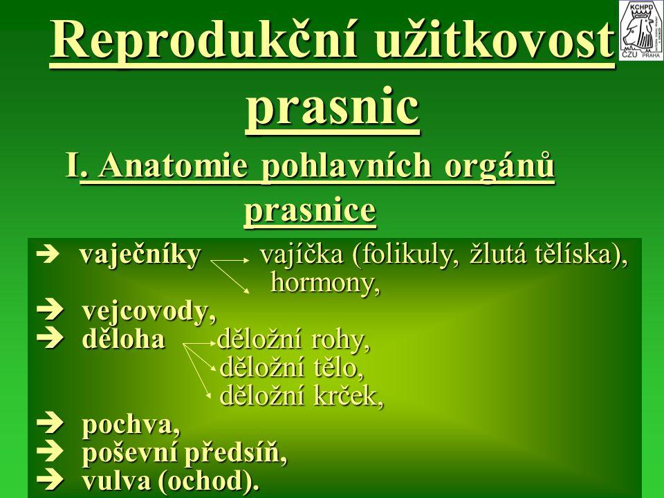 I. Anatomie pohlavních orgánů prasnice