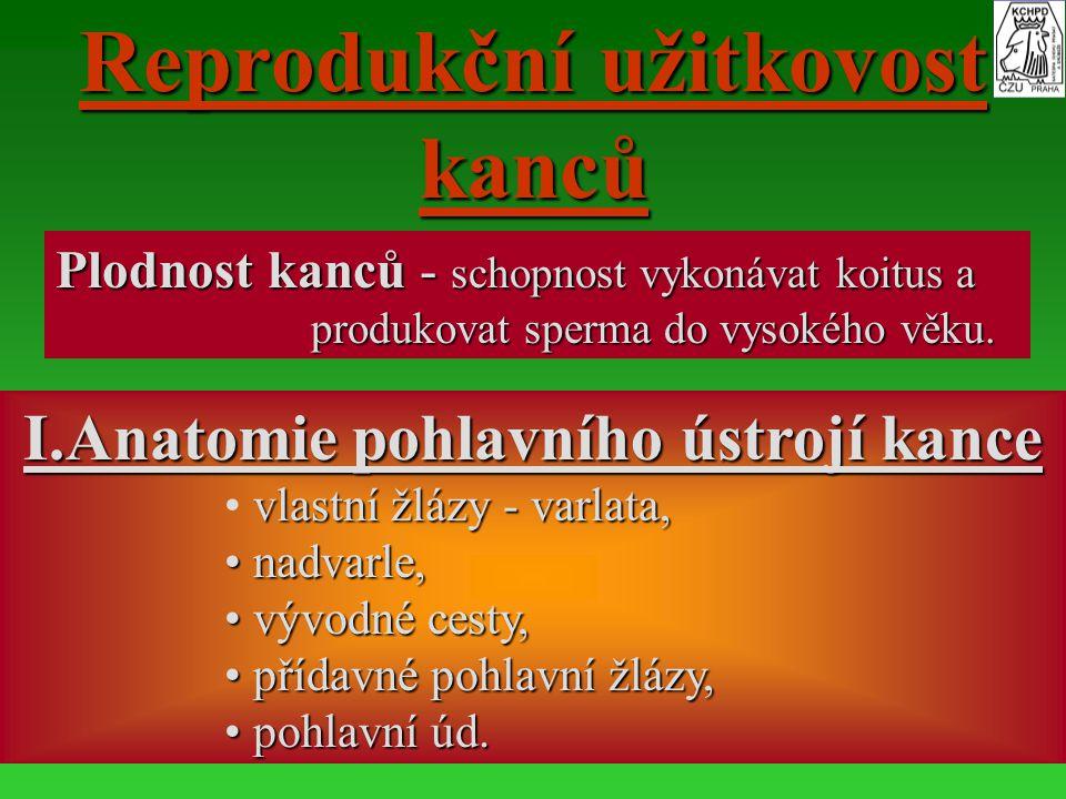 Reprodukční užitkovost kanců I.Anatomie pohlavního ústrojí kance
