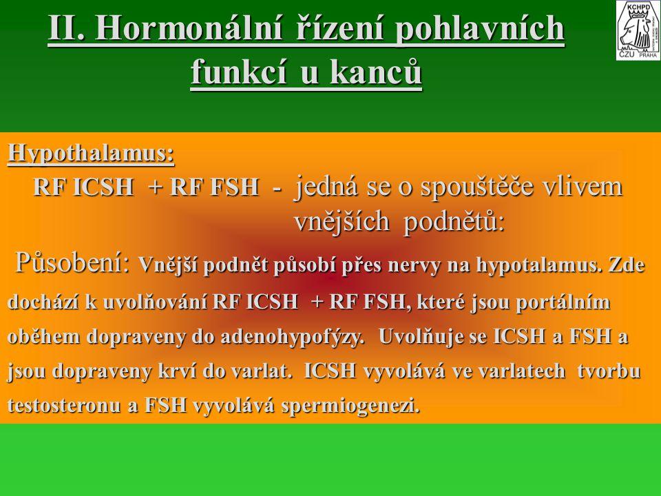 II. Hormonální řízení pohlavních funkcí u kanců