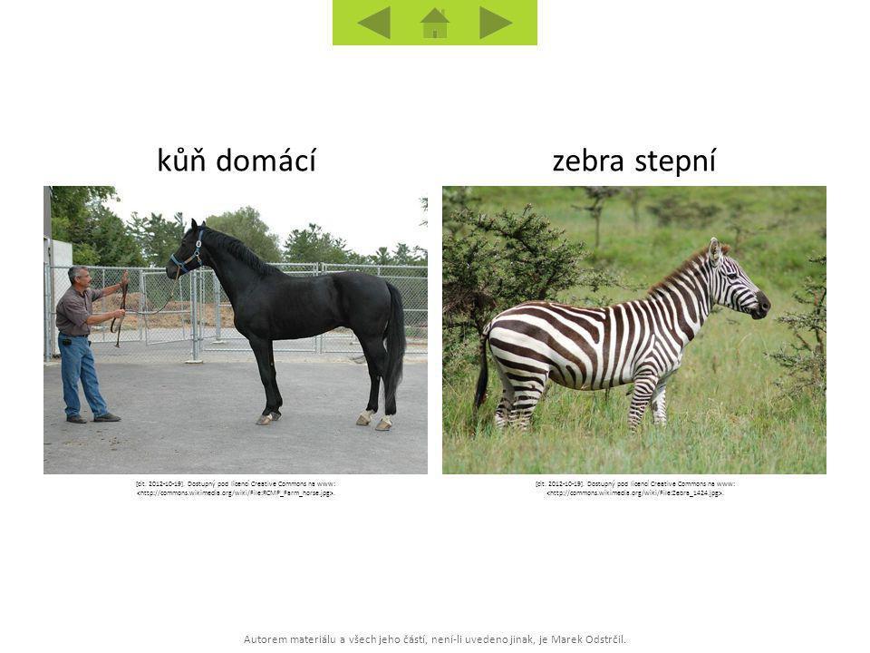 kůň domácí zebra stepní