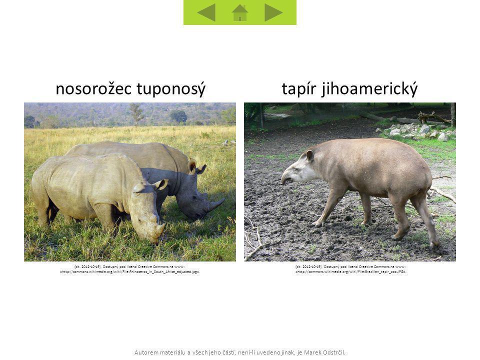 nosorožec tuponosý tapír jihoamerický