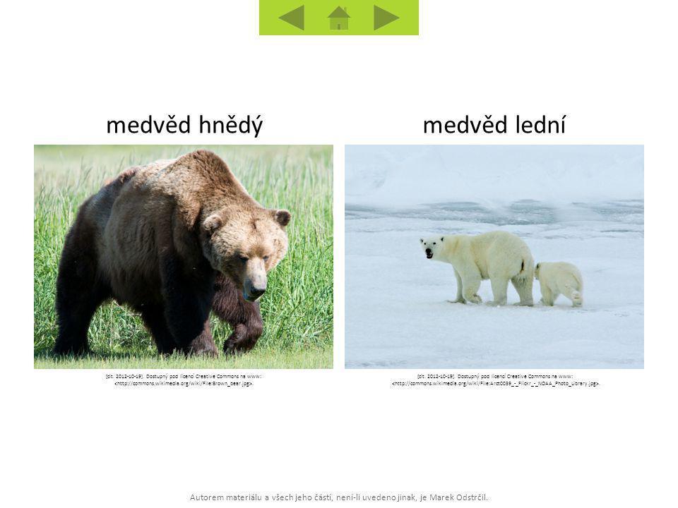 medvěd hnědý medvěd lední