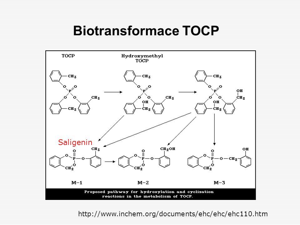 Biotransformace TOCP Saligenin