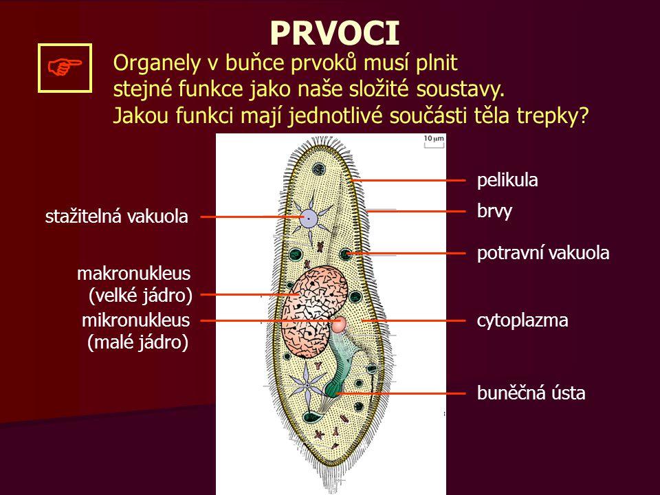  PRVOCI Organely v buňce prvoků musí plnit