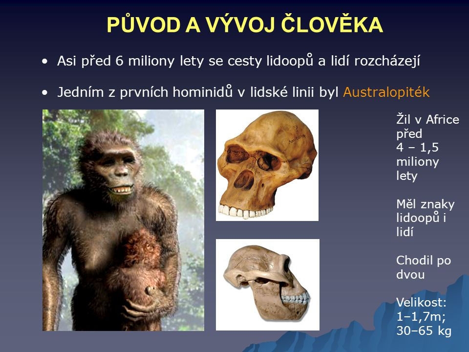 PŮVOD A VÝVOJ ČLOVĚKA Asi před 6 miliony lety se cesty lidoopů a lidí rozcházejí. Jedním z prvních hominidů v lidské linii byl Australopiték.