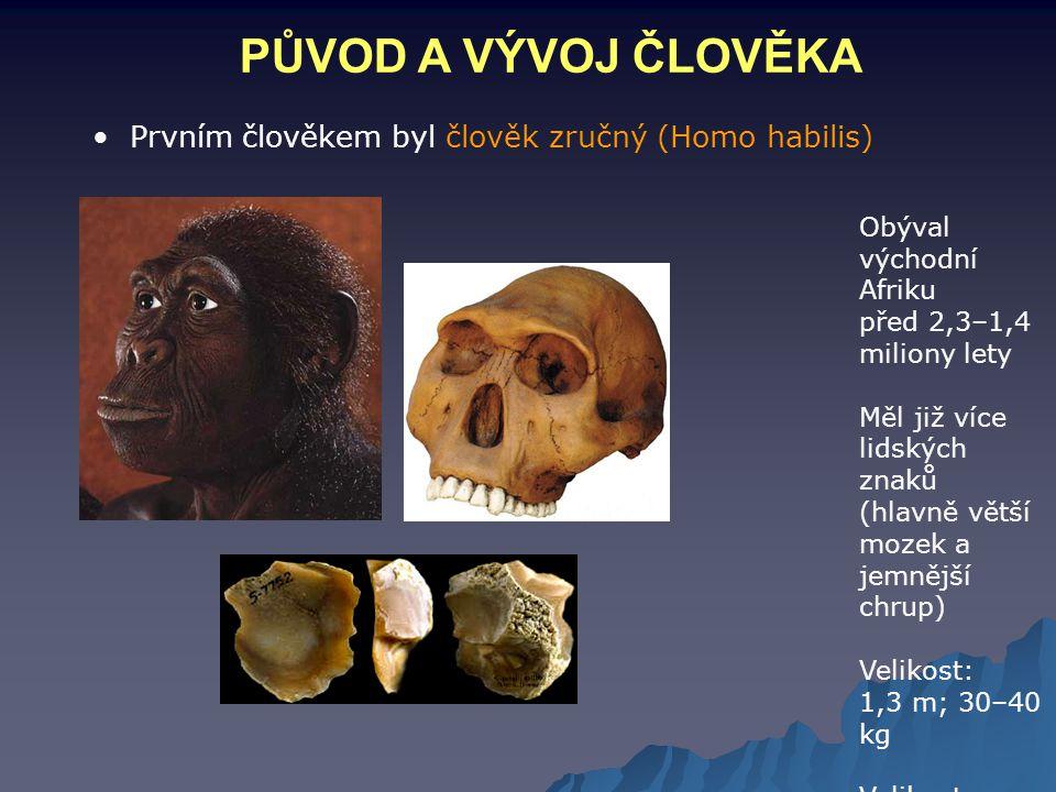 PŮVOD A VÝVOJ ČLOVĚKA Prvním člověkem byl člověk zručný (Homo habilis)