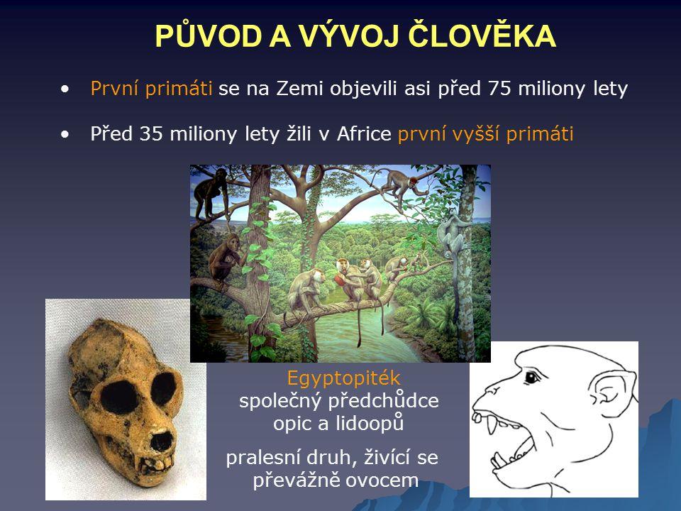 PŮVOD A VÝVOJ ČLOVĚKA První primáti se na Zemi objevili asi před 75 miliony lety. Před 35 miliony lety žili v Africe první vyšší primáti.