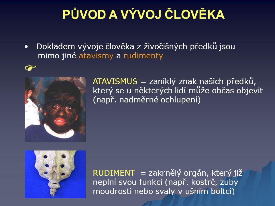 PŮVOD A VÝVOJ ČLOVĚKA Dokladem vývoje člověka z živočišných předků jsou. mimo jiné atavismy a rudimenty.