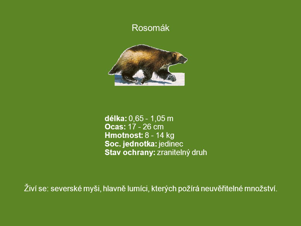 Rosomák délka: 0,65 - 1,05 m Ocas: 17 - 26 cm Hmotnost: 8 - 14 kg Soc. jednotka: jedinec Stav ochrany: zranitelný druh.