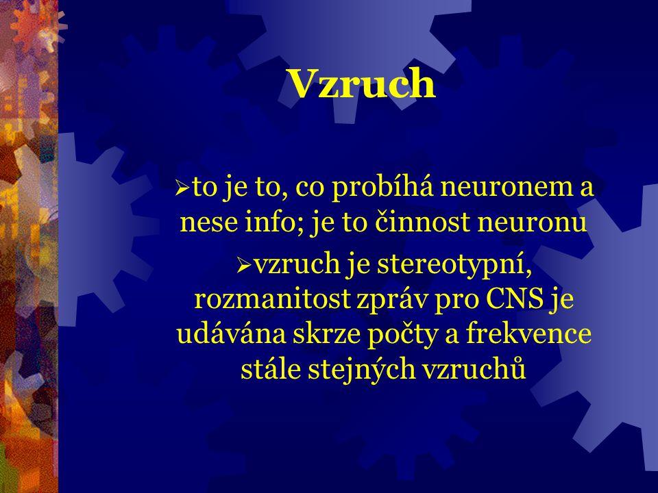to je to, co probíhá neuronem a nese info; je to činnost neuronu