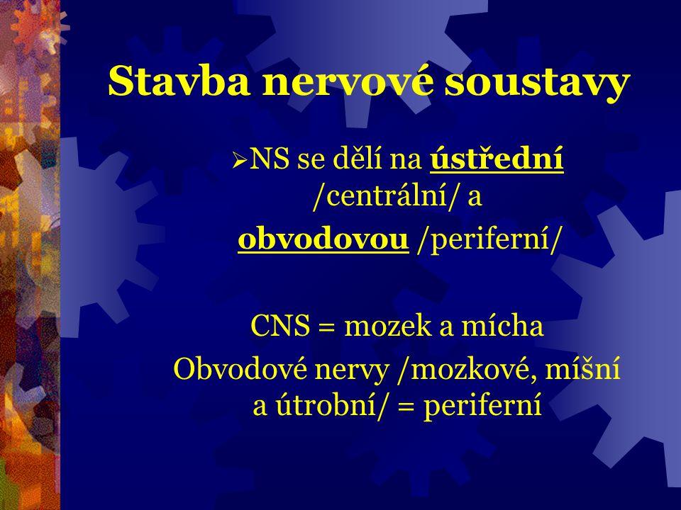 Stavba nervové soustavy