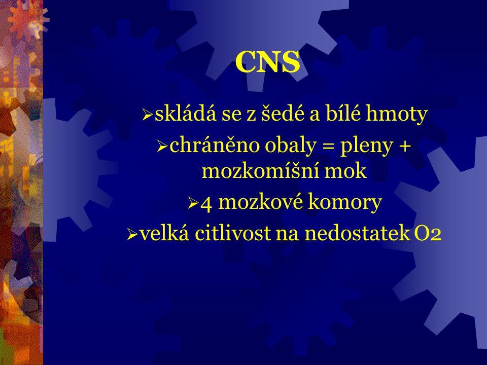 CNS skládá se z šedé a bílé hmoty