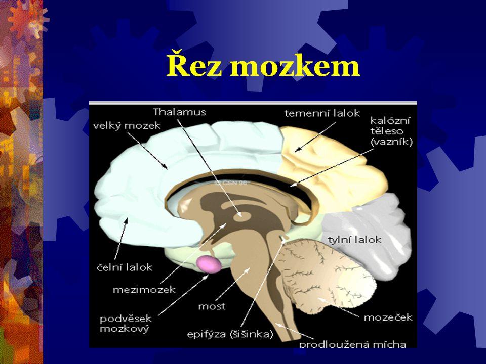 Řez mozkem