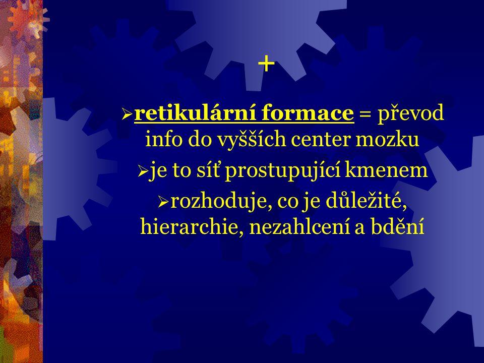 + retikulární formace = převod info do vyšších center mozku
