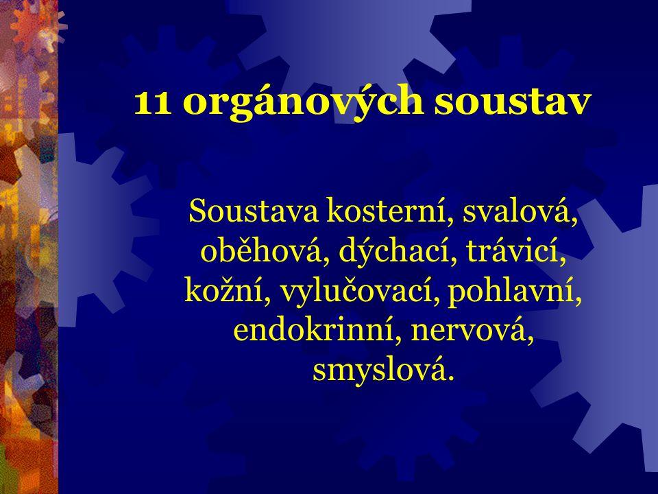 11 orgánových soustav Soustava kosterní, svalová, oběhová, dýchací, trávicí, kožní, vylučovací, pohlavní, endokrinní, nervová, smyslová.
