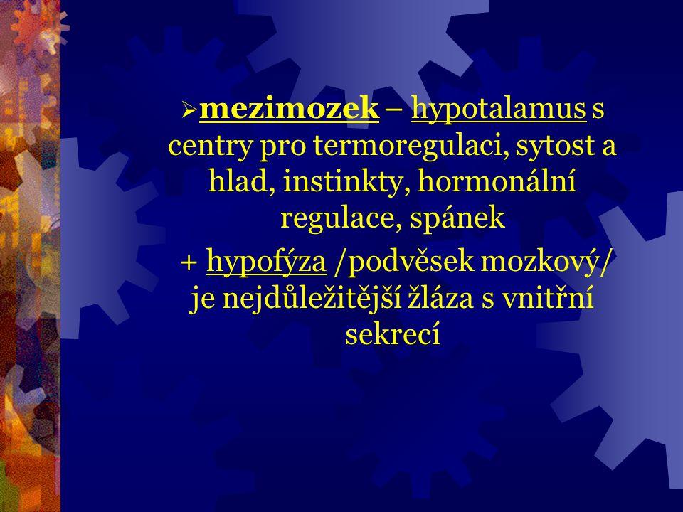 mezimozek – hypotalamus s centry pro termoregulaci, sytost a hlad, instinkty, hormonální regulace, spánek