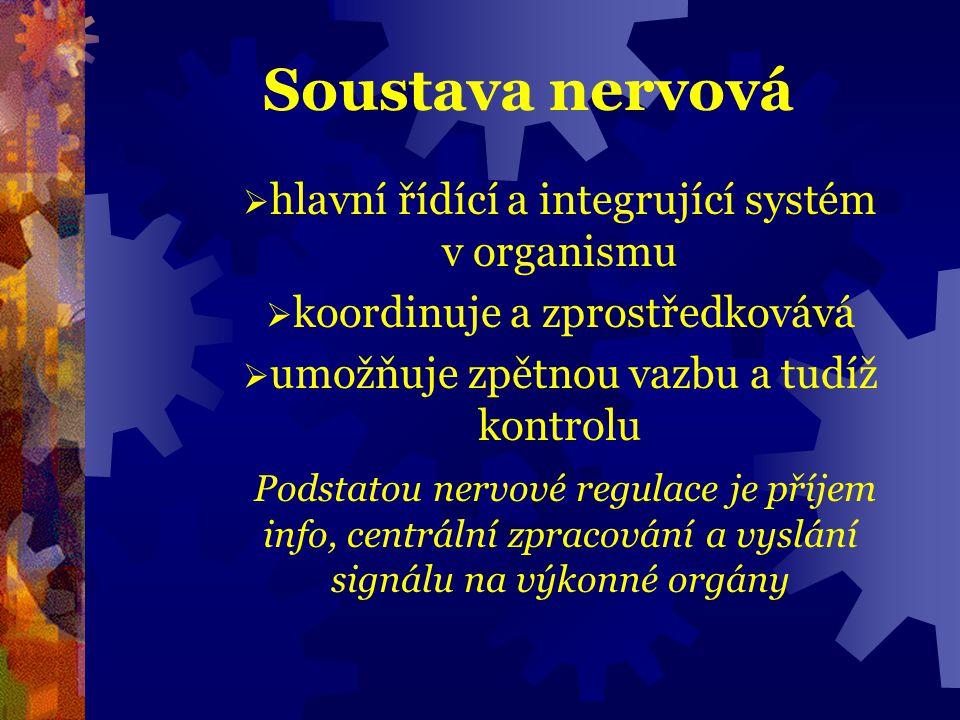 Soustava nervová hlavní řídící a integrující systém v organismu