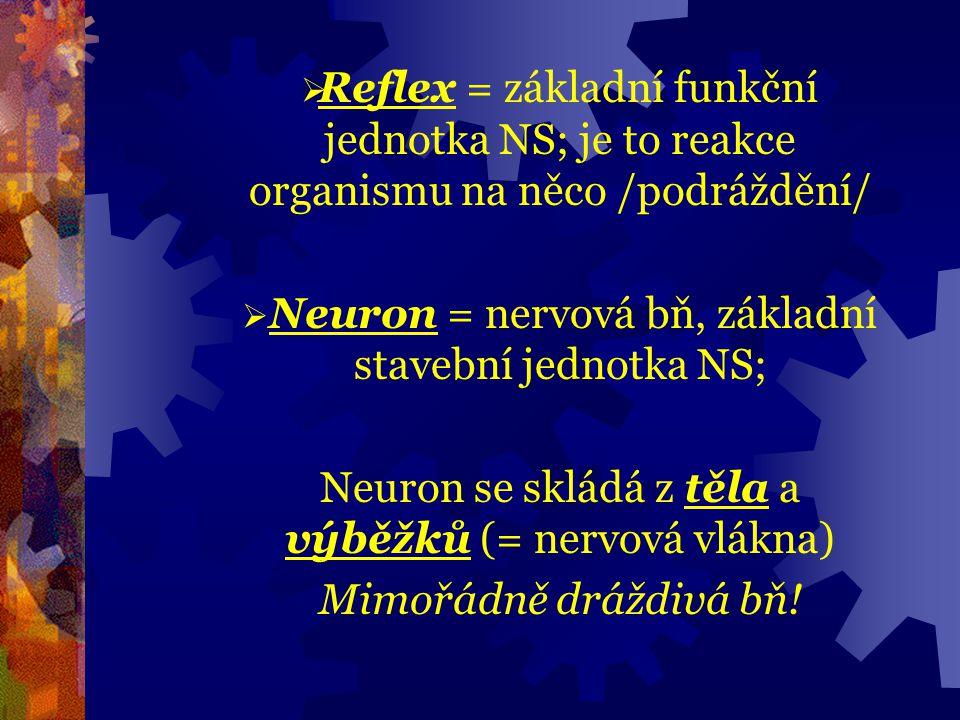 Neuron = nervová bň, základní stavební jednotka NS;