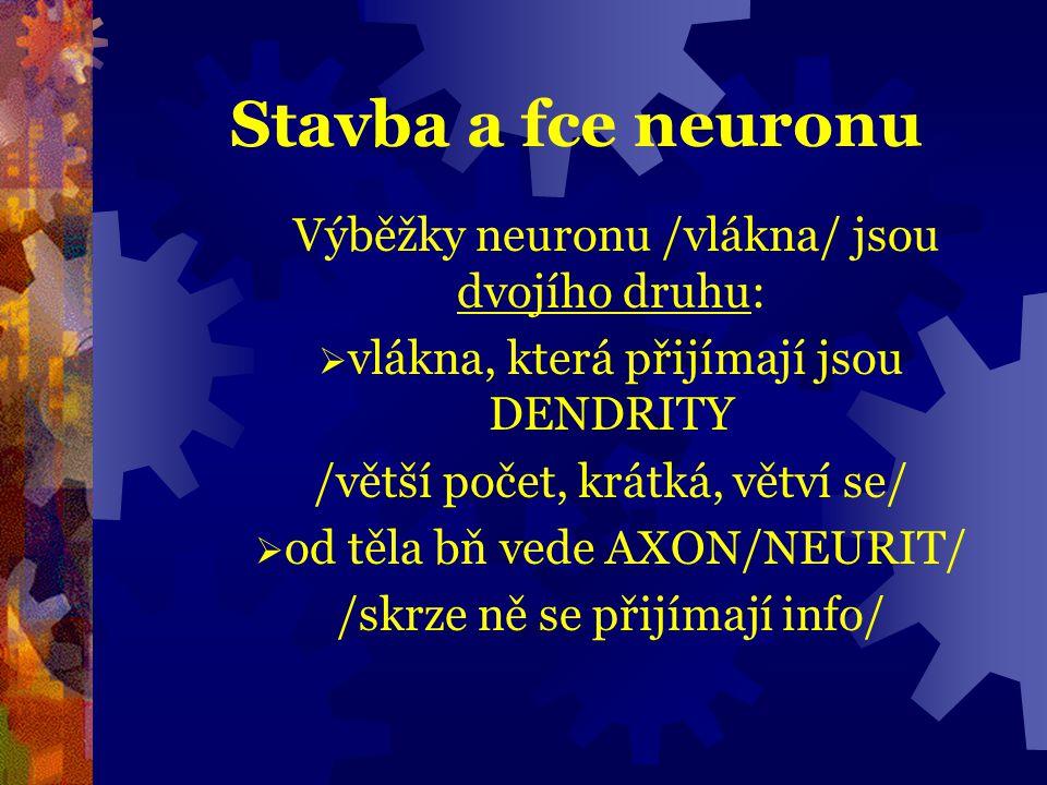 Stavba a fce neuronu Výběžky neuronu /vlákna/ jsou dvojího druhu: