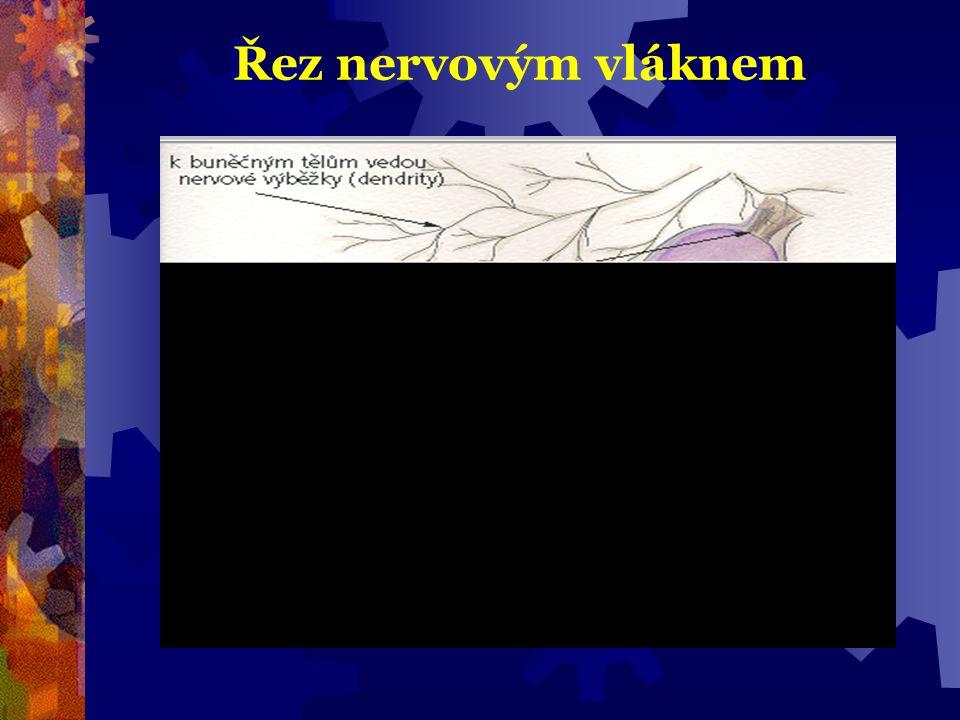 Řez nervovým vláknem