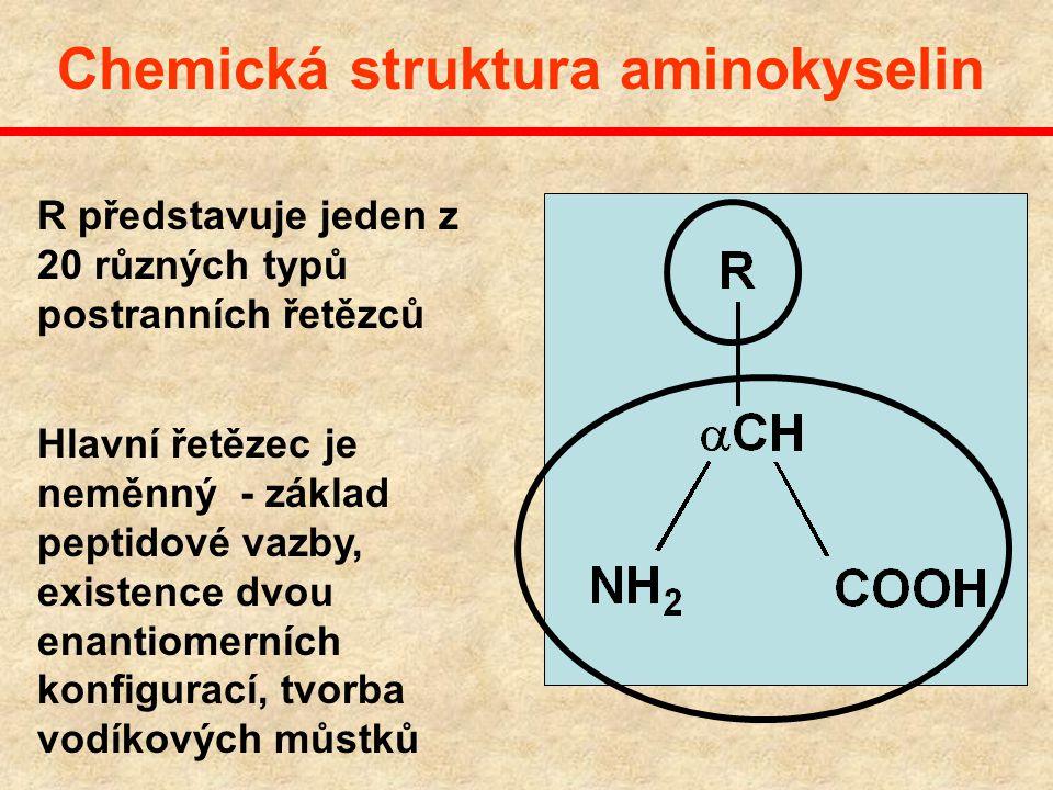 Chemická struktura aminokyselin