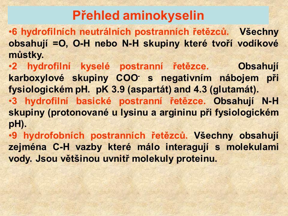 Přehled aminokyselin 6 hydrofilních neutrálních postranních řetězců. Všechny obsahují =O, O-H nebo N-H skupiny které tvoří vodíkové můstky.