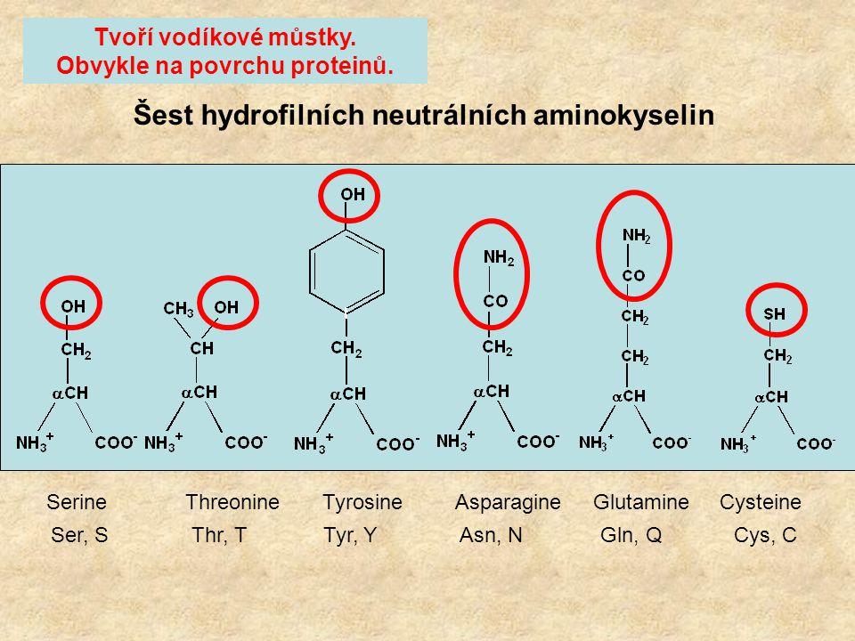 Šest hydrofilních neutrálních aminokyselin