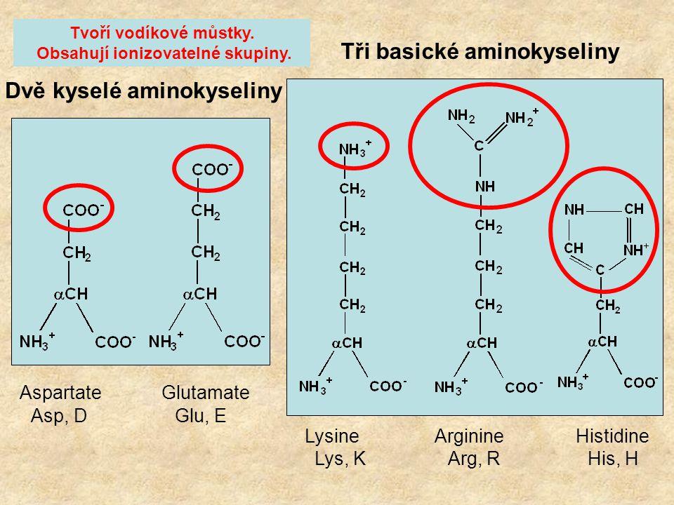 Tři basické aminokyseliny Dvě kyselé aminokyseliny