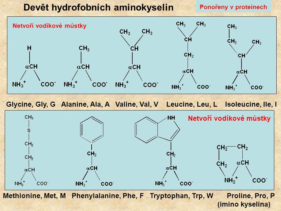 Devět hydrofobních aminokyselin Netvoří vodíkové můstky