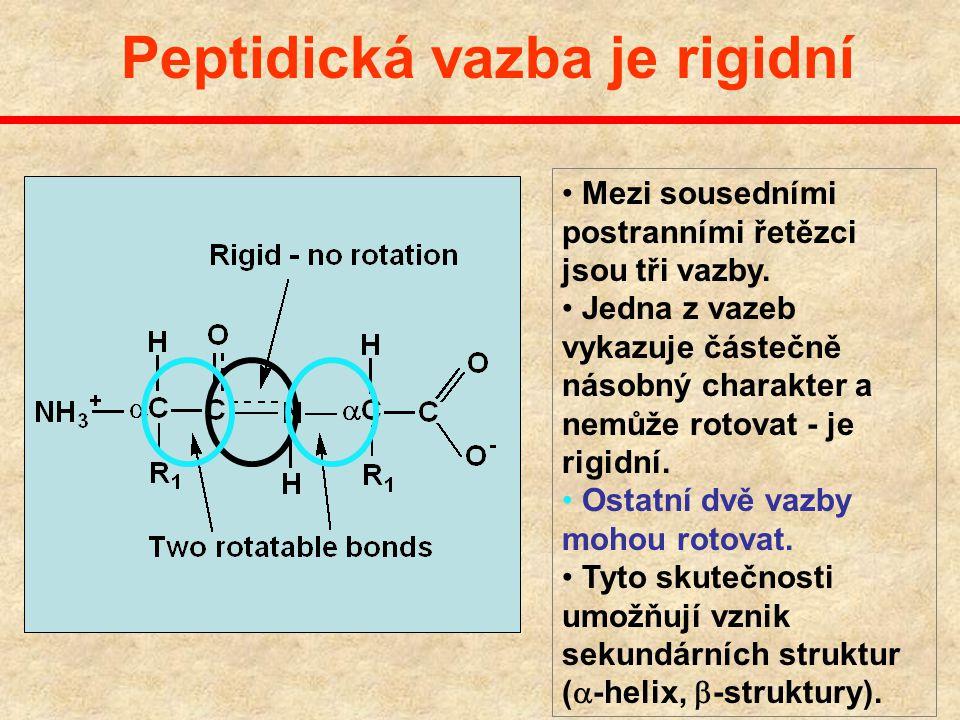 Peptidická vazba je rigidní