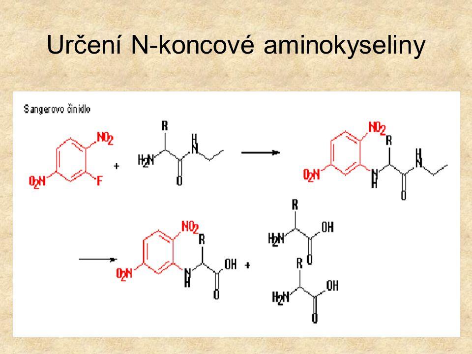 Určení N-koncové aminokyseliny