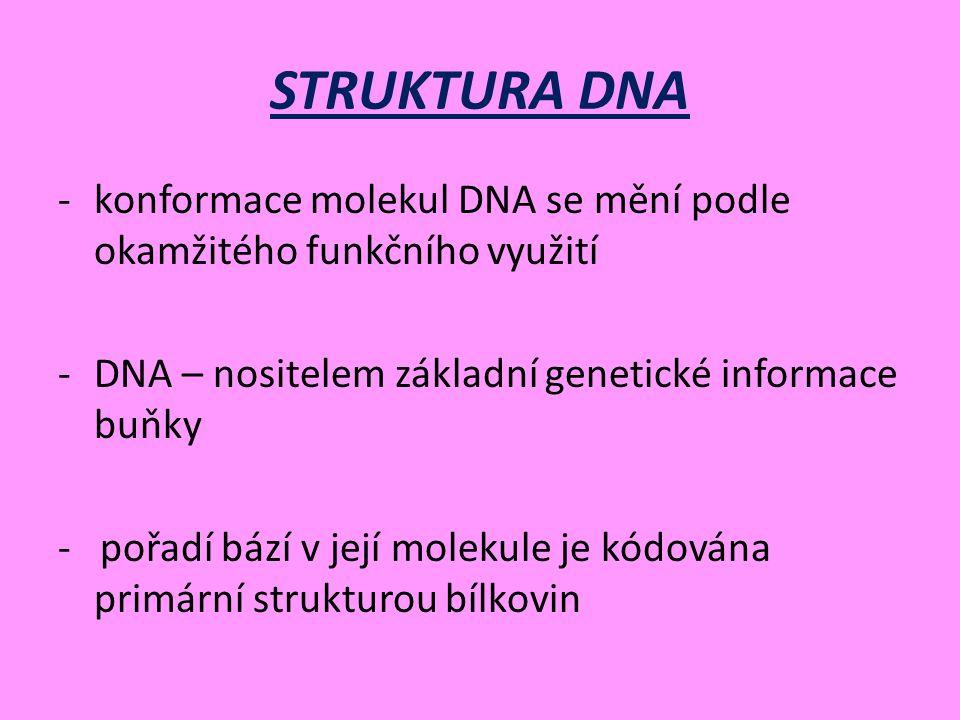 STRUKTURA DNA konformace molekul DNA se mění podle okamžitého funkčního využití. DNA – nositelem základní genetické informace buňky.