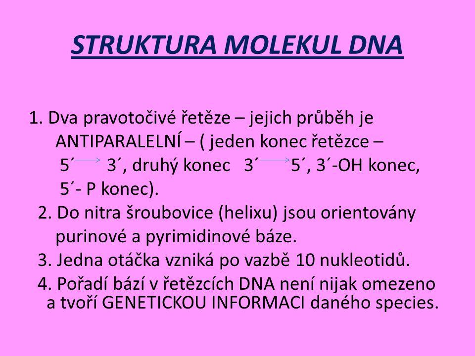 STRUKTURA MOLEKUL DNA