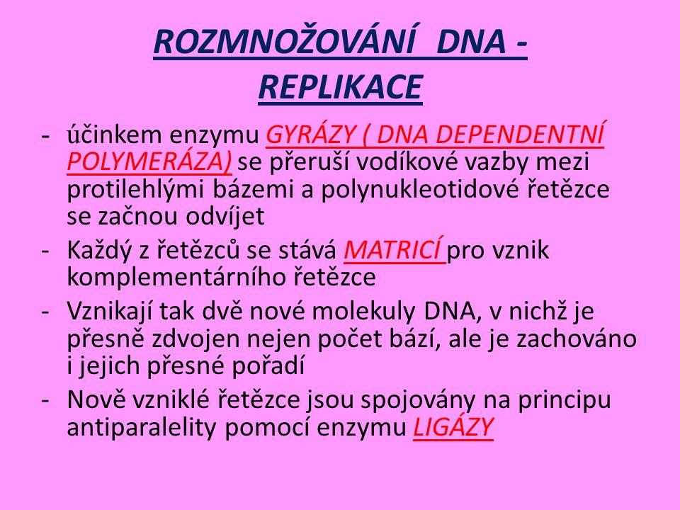 ROZMNOŽOVÁNÍ DNA - REPLIKACE