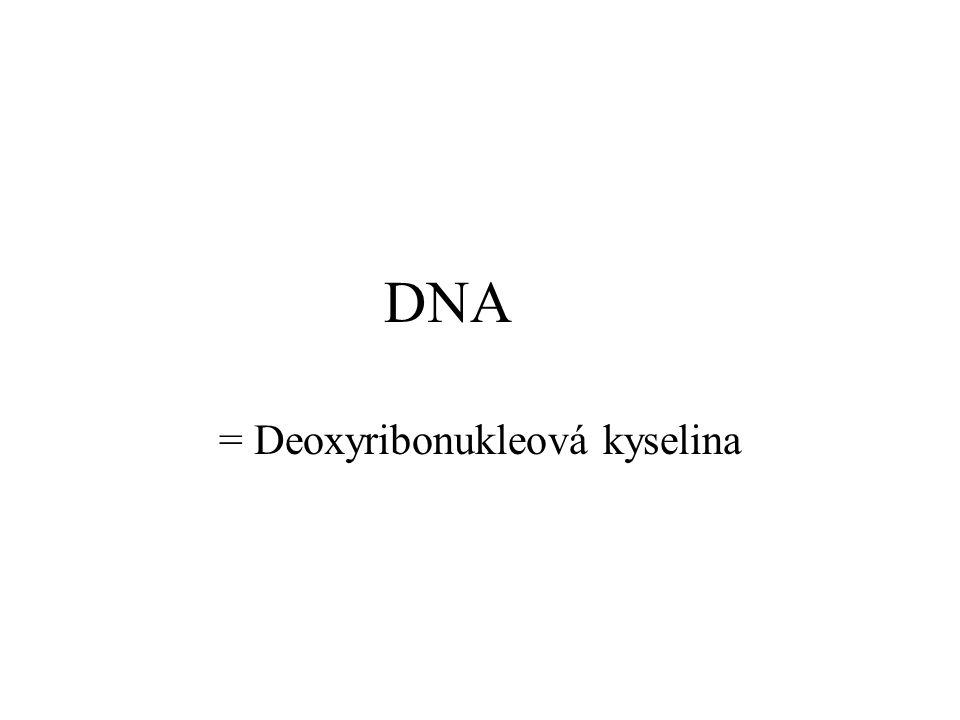 = Deoxyribonukleová kyselina