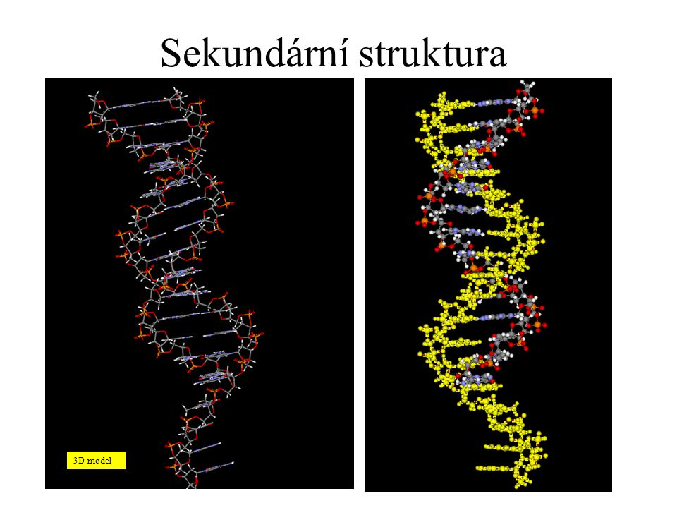 Sekundární struktura