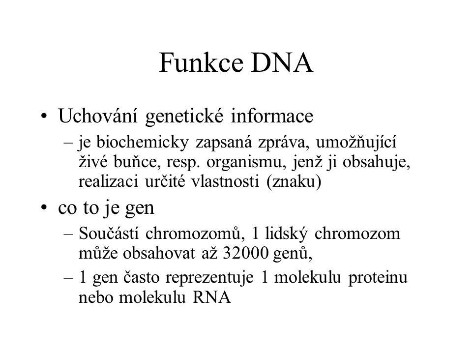 Funkce DNA Uchování genetické informace co to je gen