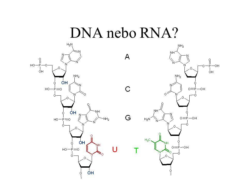 DNA nebo RNA