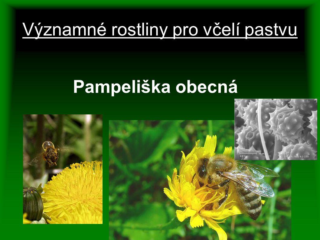 Významné rostliny pro včelí pastvu