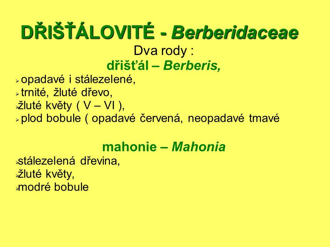 DŘIŠŤÁLOVITÉ - Berberidaceae